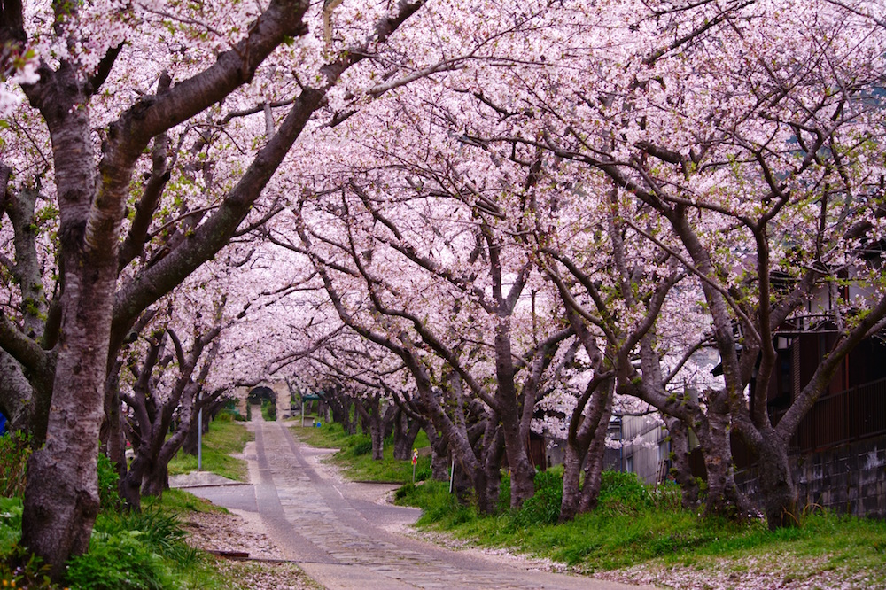 list-of-stock-image-sites-pink-blossom